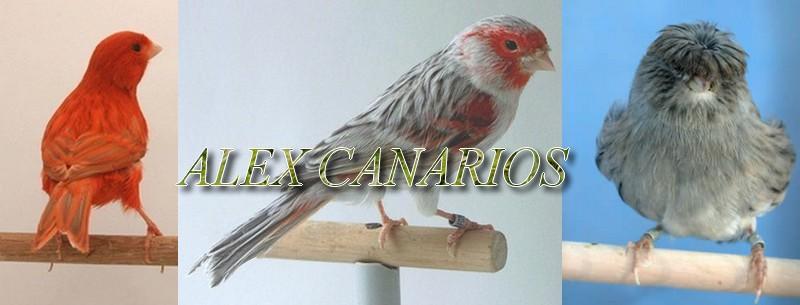 Alex Canarios