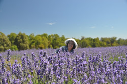 belajar ilmu bunga lavender di FKIP Unika Atmajaya, marissa haque fawzi