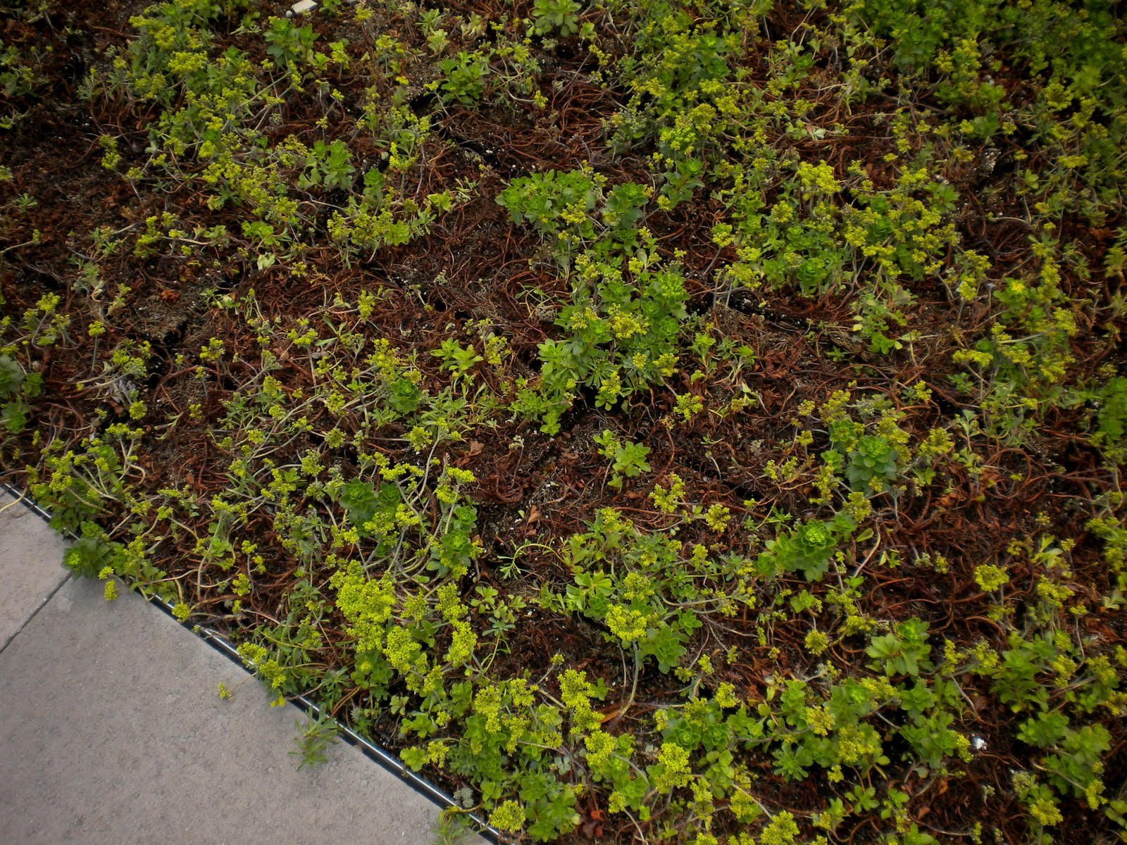 Sherri S Jubilee New Building With A Quot Green Roof Quot