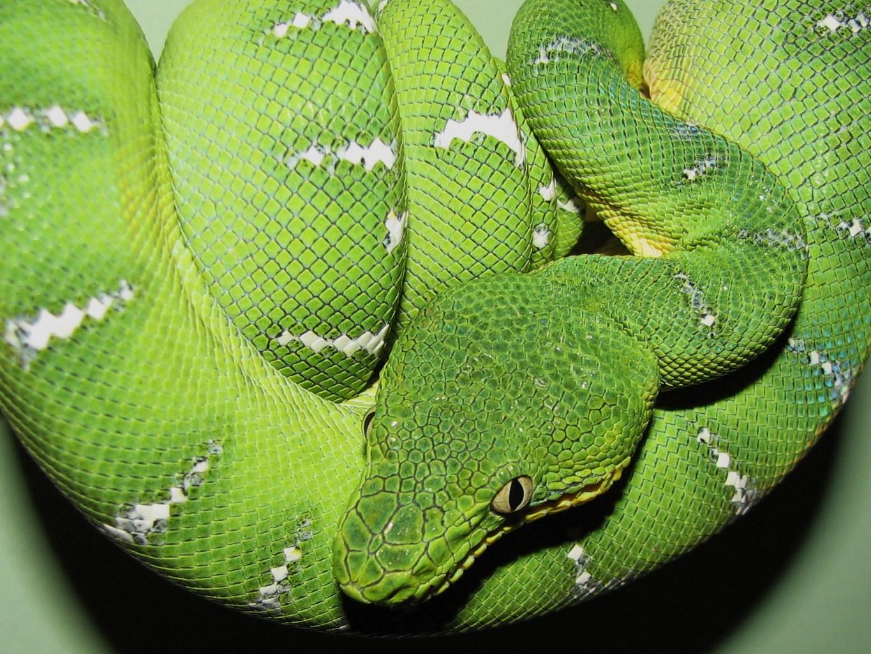 The Care of Reptiles and Invertebrates; Including Tarantulas ...