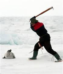 Clubbing Seals in NEVER ok. Say no to Namibia and Canada!