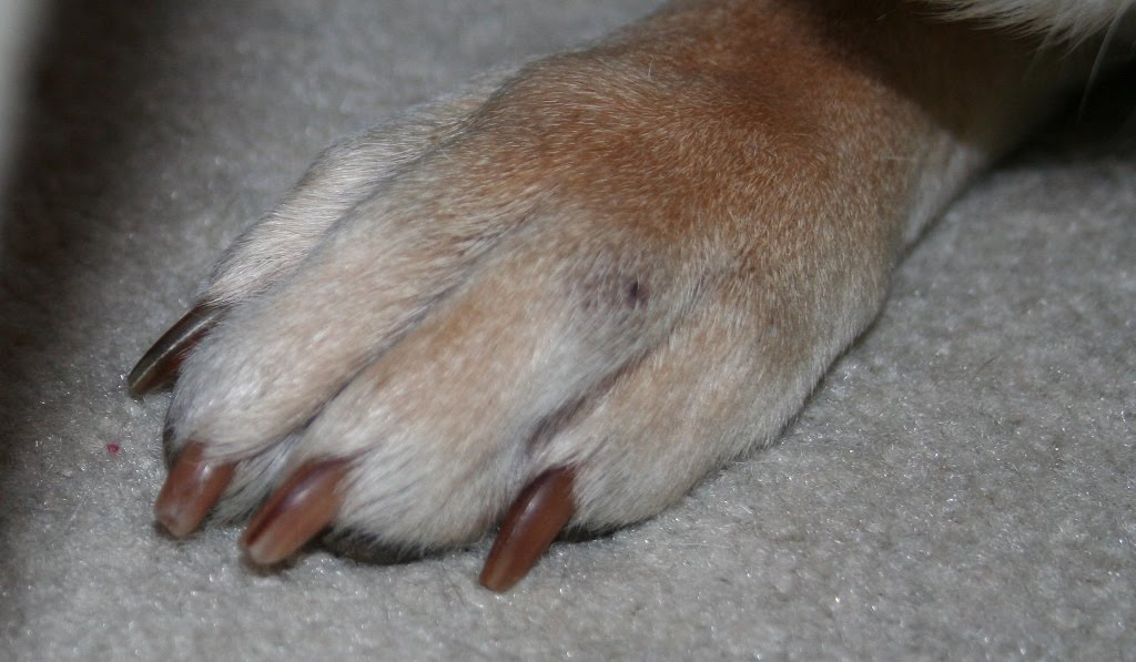Bumps Between My Dog S Toes