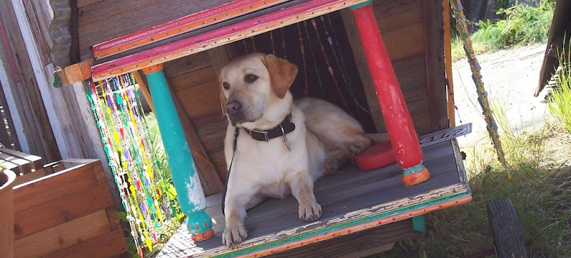 cabana is sitting on a front porch of sorts, of a little dog house, there is a green pillar on one side of her, a pink one on the other, both posts have paint worn away, there are beaded curtains to the side of her and behind her, the doorway behind her leads into the actual dog house