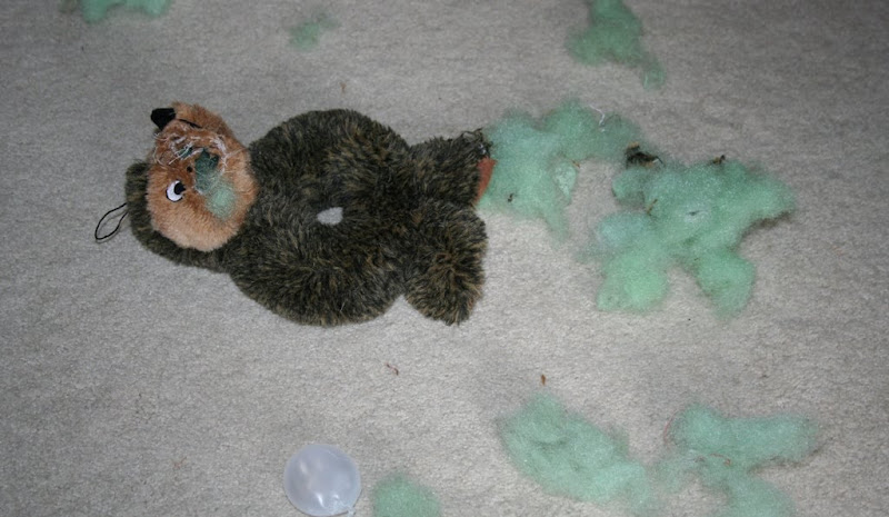 a close up of the destroyed toy, cabana has ripped open the hedgehog's face