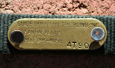 gold placard that came attached to Cabana's big girl collar