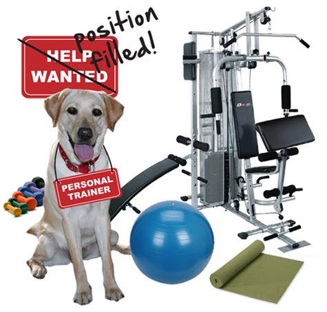 cabana sitting in the middle of weight machine, exercise ball, colorful dumbbells, and yoga mat; she's wearing a red and white sign that says personal trainer on it; above her head is a sign that says help wanted, but crossed out with the words position filled