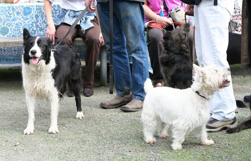 lots of human legs with dogs around them, including border collie, a westie and a black dog of some sort