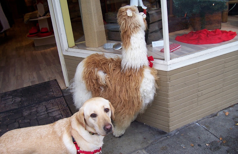 cabana standing by doorway of a store, there's a stuffed animal llama with lots of real llama hair on it I think, next to the doorway