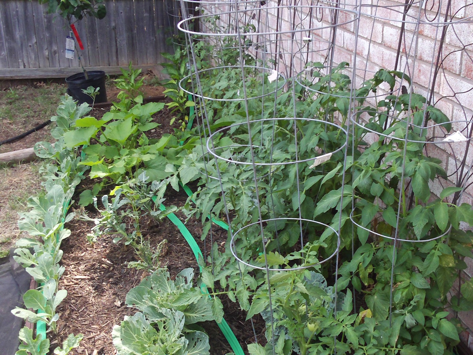 Dr jennifer t edwards texas author researcher and - Olive garden miller lane dayton ohio ...