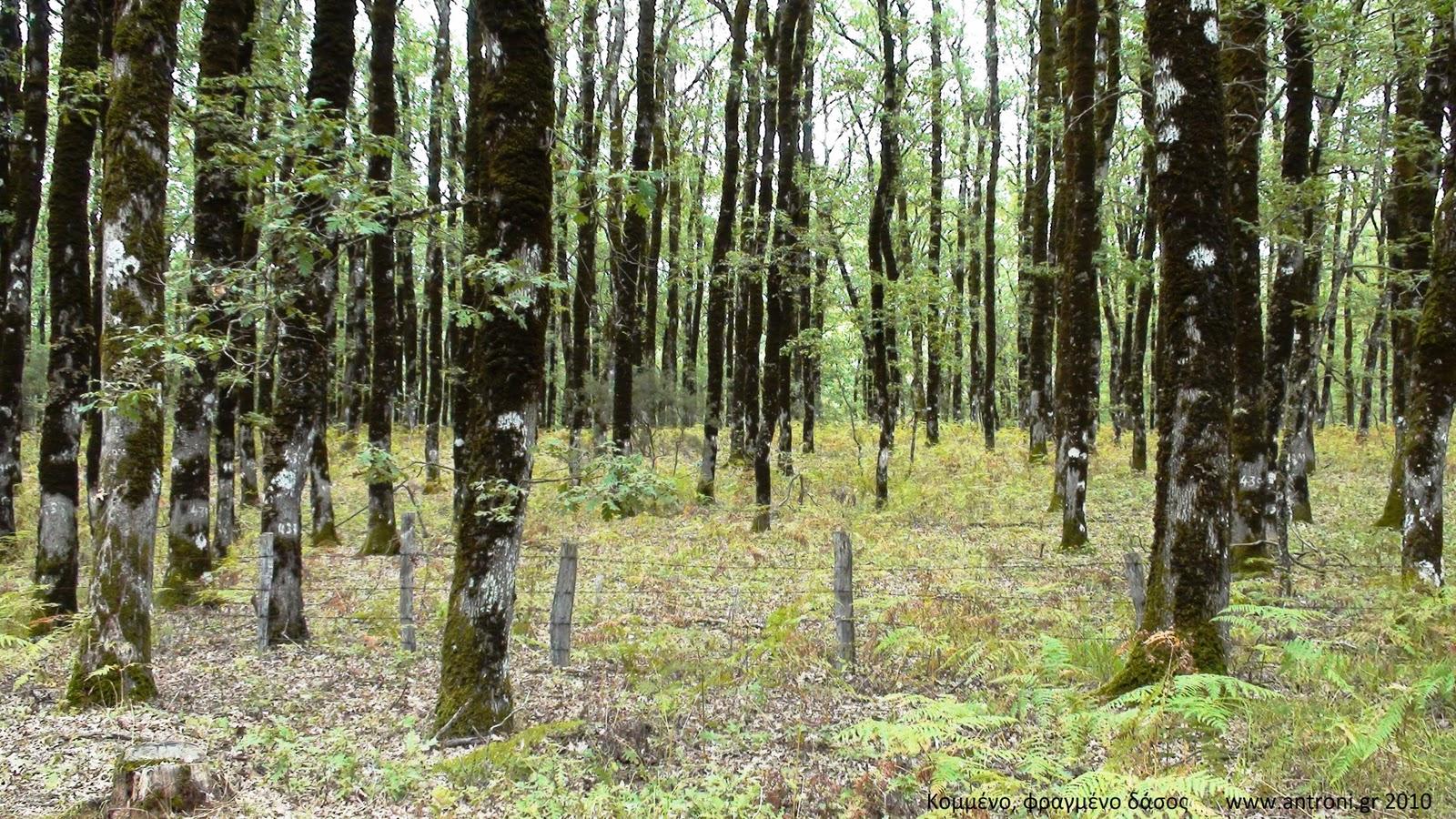 Κομμένο και φραγμένο δάσος
