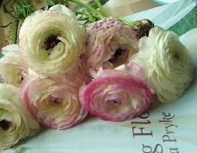 Ranunculus Blossoms