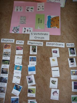 Invertebrates vertebrates the five vertebrate groups
