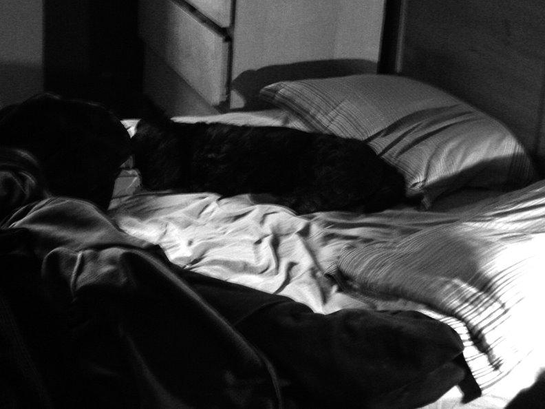 scottie, scottish terrrier, sleeping dog, lazy dog