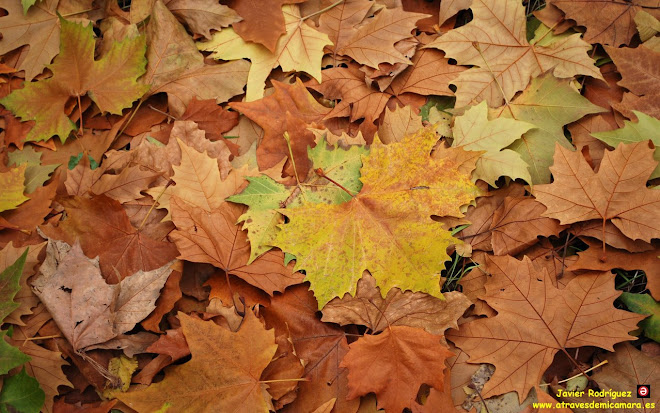 91 huele a otoño