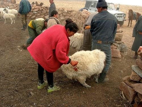 Health study diet mongolia