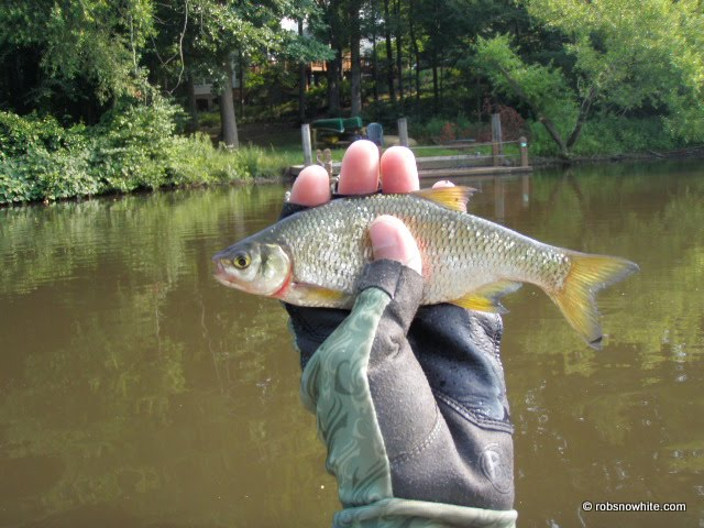 Fly Fishing Virginia | Client Photos - 2010 Year In Review ...