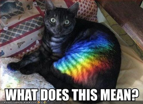 funny dogs and cats with captions. dresses Funny animals with