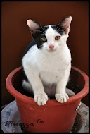 Cat.. Kuceng.. Miow