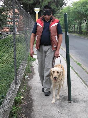 Proyecto fotográfico perros guía para ciegos