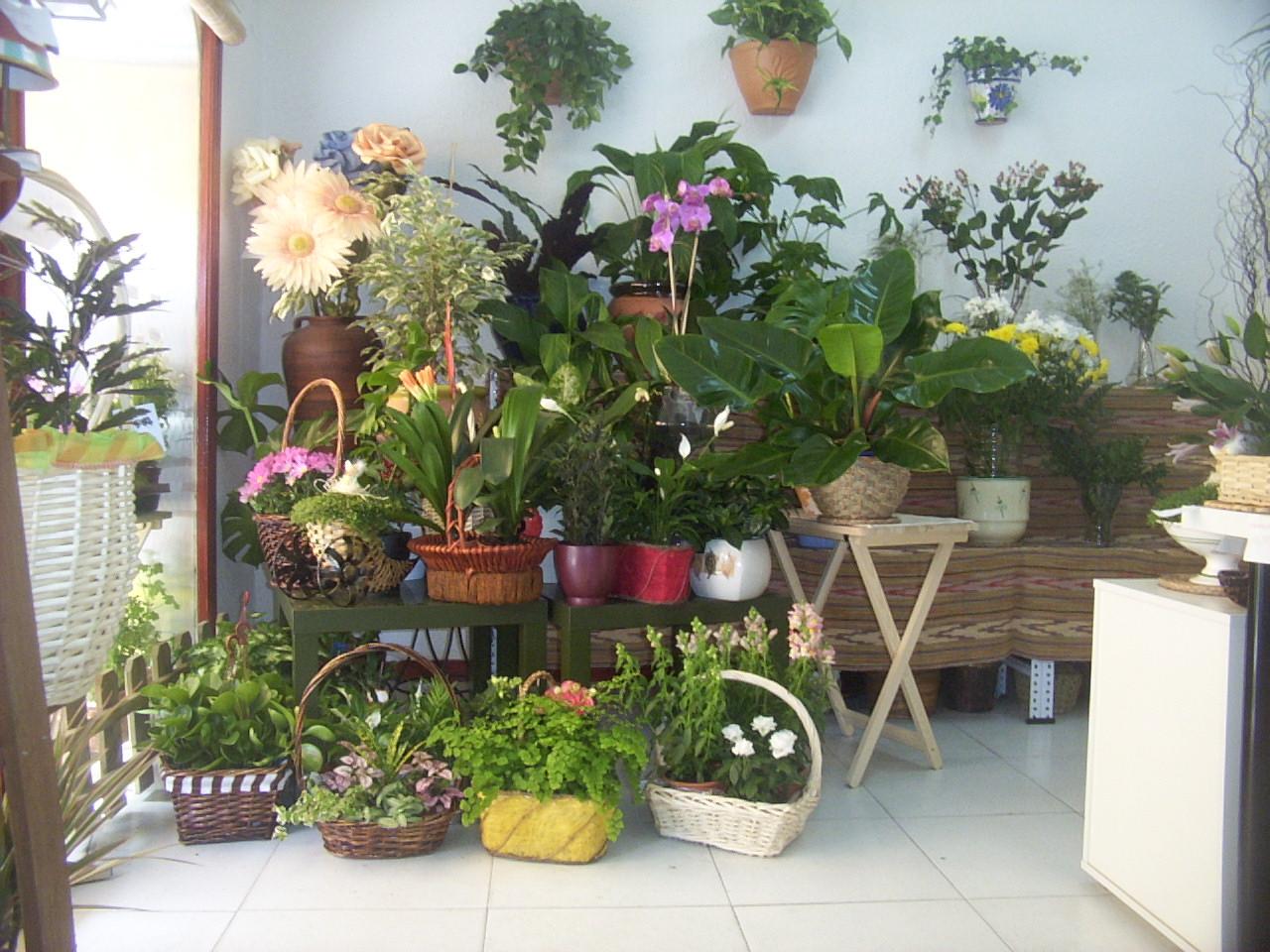 Ejemplos de estudiantes noviembre 2010 for Plantas ornamentales helechos