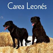 Carea Leonés