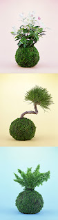 Kokedama