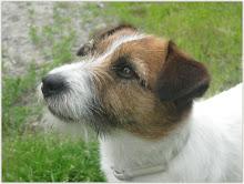 Min herlige hund