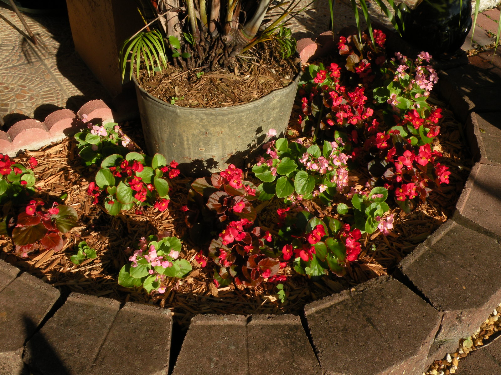 Dragonfly Garden The Year Of The Begonias