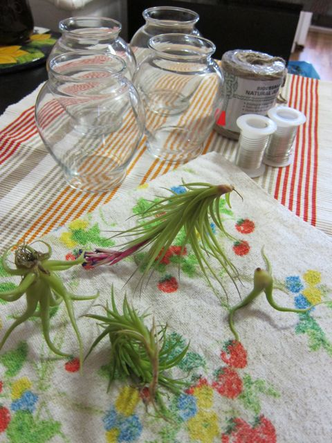 Craftaholics anonymous rtw air plant chandelier tutorial rtw air plant chandelier tutorial aloadofball Image collections