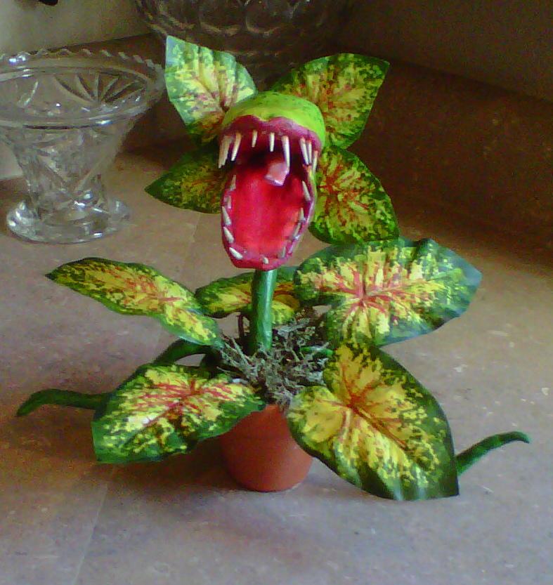 Butterwort plant eating