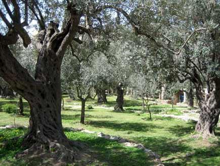 Blue Eyed Ennis: The Garden of Gethsemane