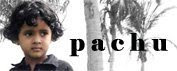 Pachutty