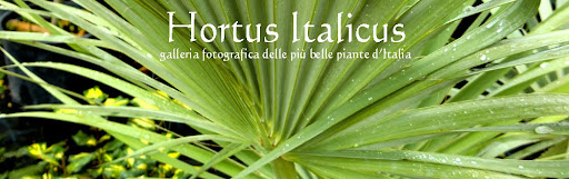 Hortus Italicus