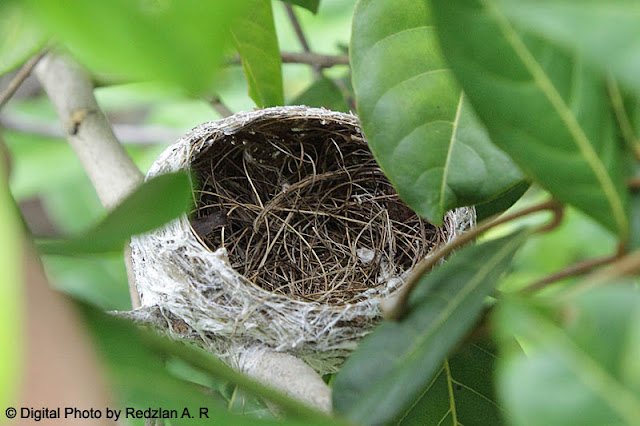 Empty Nest