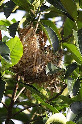 Nest destroyed