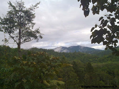 Sky at Raub's Forest