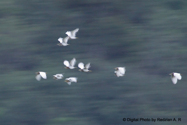 Pond Hereon in flight