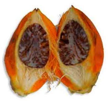 Buah Pihang -Areca Nuts (Areca catechu)