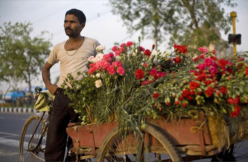[A+ful-wallah+delivers+flowers+on+his+bicycle+in+the+district+of+Mehrauli,+one+of+seven+ancient+cities+that+are+now+a+part+of+Delhi[2]]
