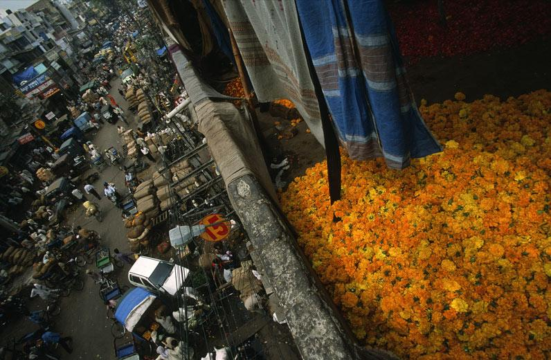 [Marigold+flower+heads,+used+in+religious+ceremonies,+dry+on+a+roof+above+a+flower+market+near+Khari+Baoli,+in+the+heart+of+Old+Delhi[1]]