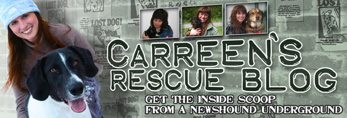 Carreen's Rescue Blog