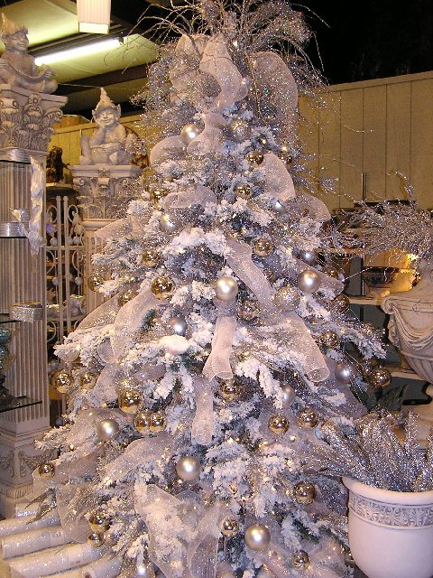 Silver Tree Pix Taken by Kathy K
