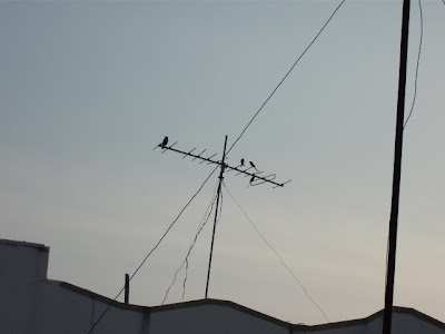 Small Birds on an Antenna