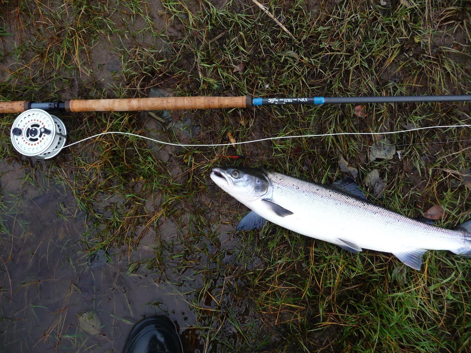 Salmon fishing scotland salmon fishing scotland autumn for Salmon fishing colorado