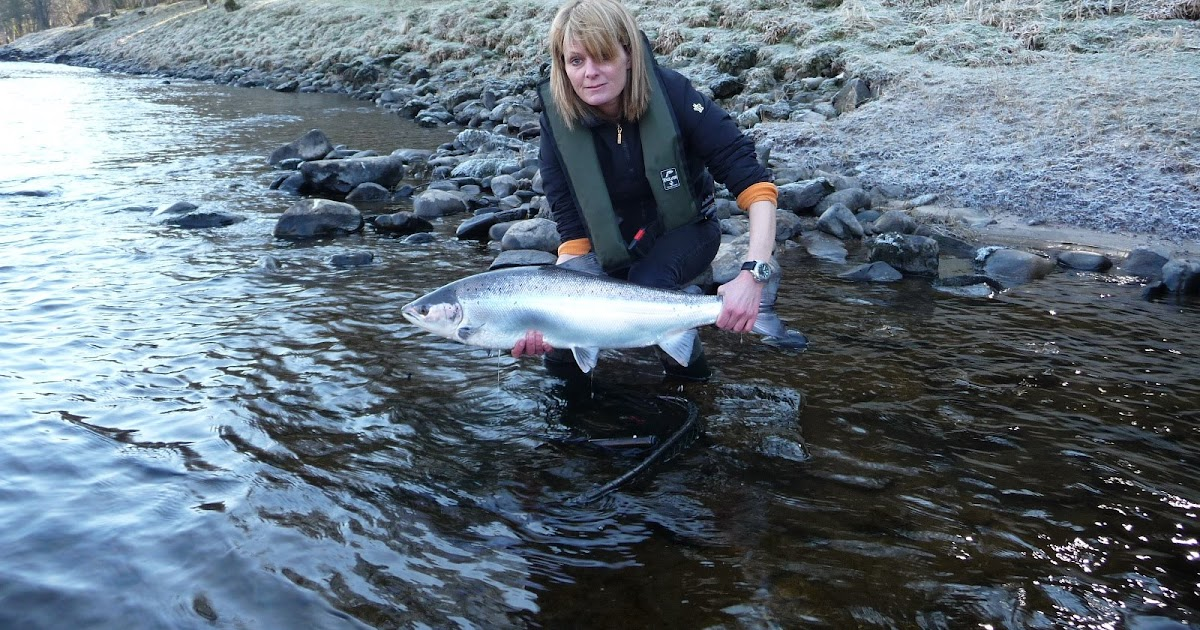 Salmon fishing scotland salmon fishing scotland atlantic for Salmon fishing season