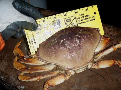 Crabbing+17.JPG