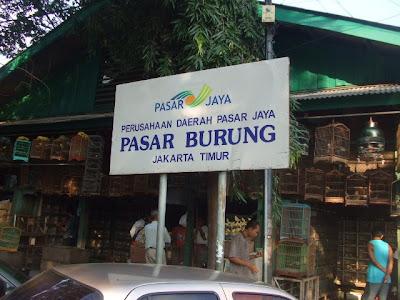 bird market pasar burung - jakarta shopping center