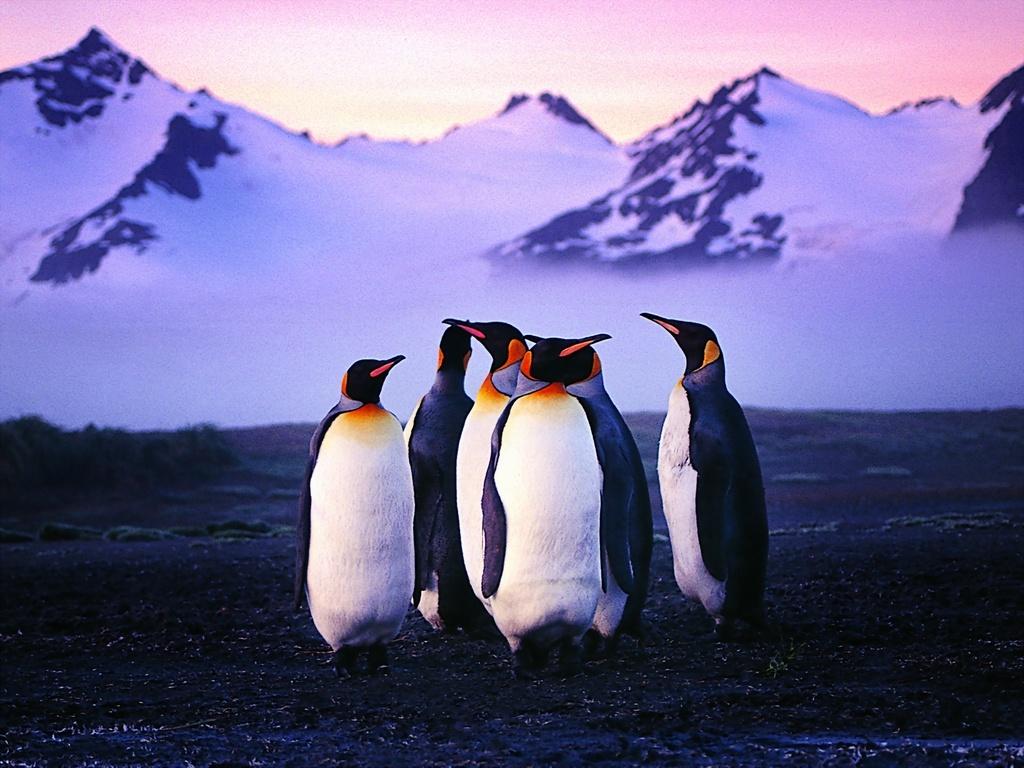 - Pinguini di natale immagini ...