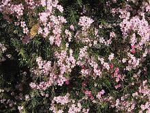Our bush