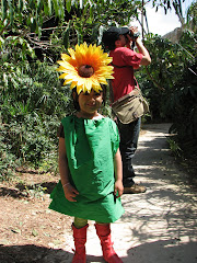 Terra Natura - fata-floarea-soarelui